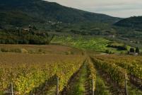 2015Oct20_Tuscany_0050