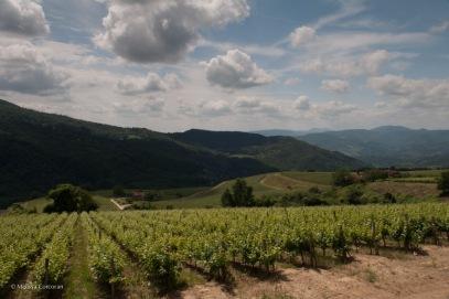 Vines.