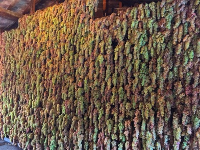 A tapestry of grapes.